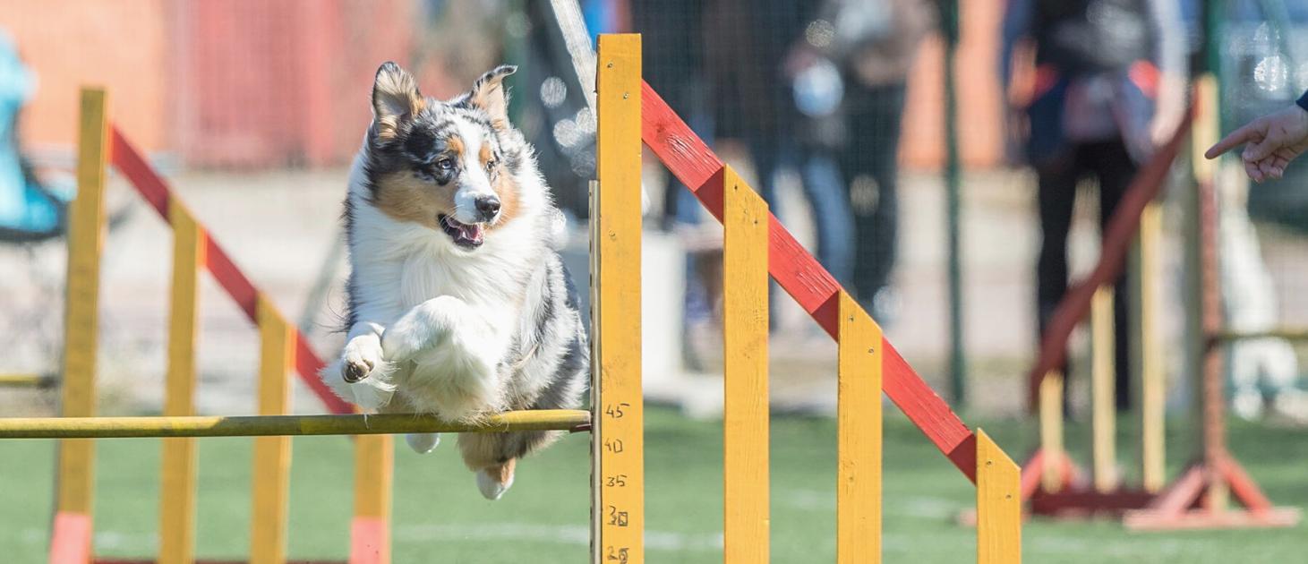 Koeraga sportimine