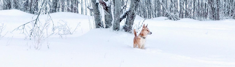 Koeraga talvel õue
